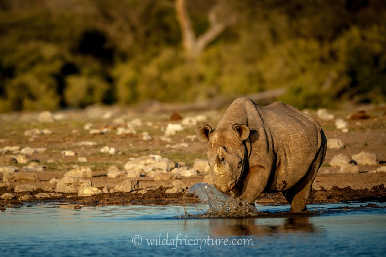 Wachizungu Trip 2015 – ETOSHA NATIONAL PARK,NAMIBIA.