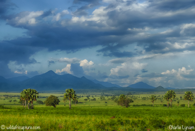 Wachizungu Wanderings 2016 – Sipi Falls, The Karamojong, Kidepo and Murchison NationalParks.