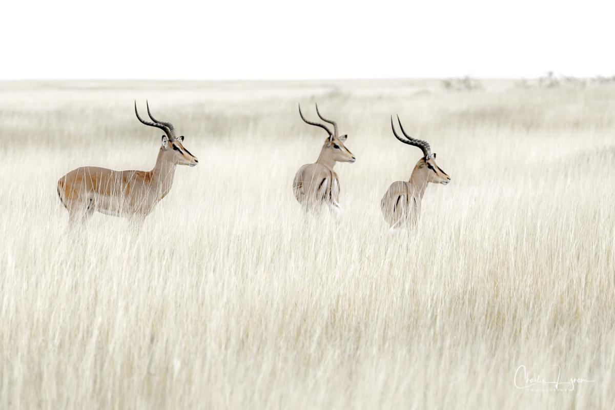 Wachizungu Wanderings – Namibia '21 – On To Etosha Pan NationalPark.